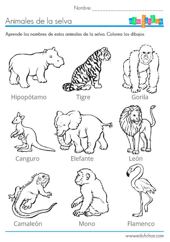 Los animales de la selva para colorear: http://www