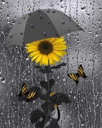 Yellow Gray Wall Art Sunflower/Butterflies/Bathroom ...