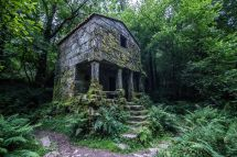 Abandoned Building Forest