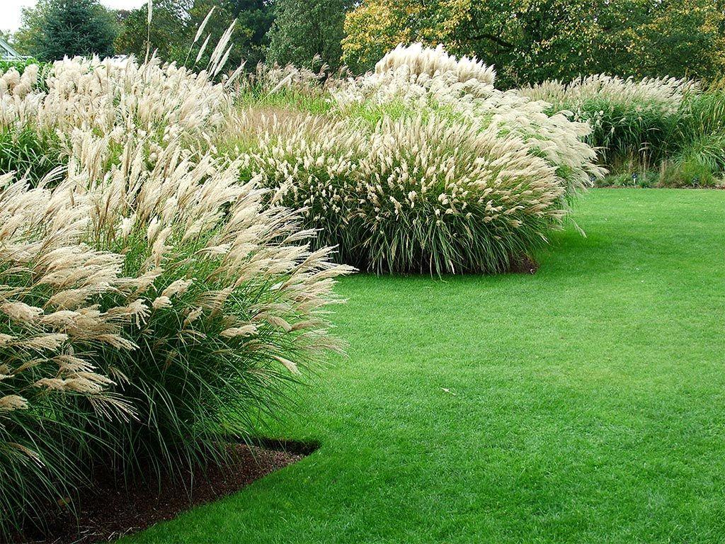 Inspiring Landscaping Grasses Ideas Design Ideas & Decors