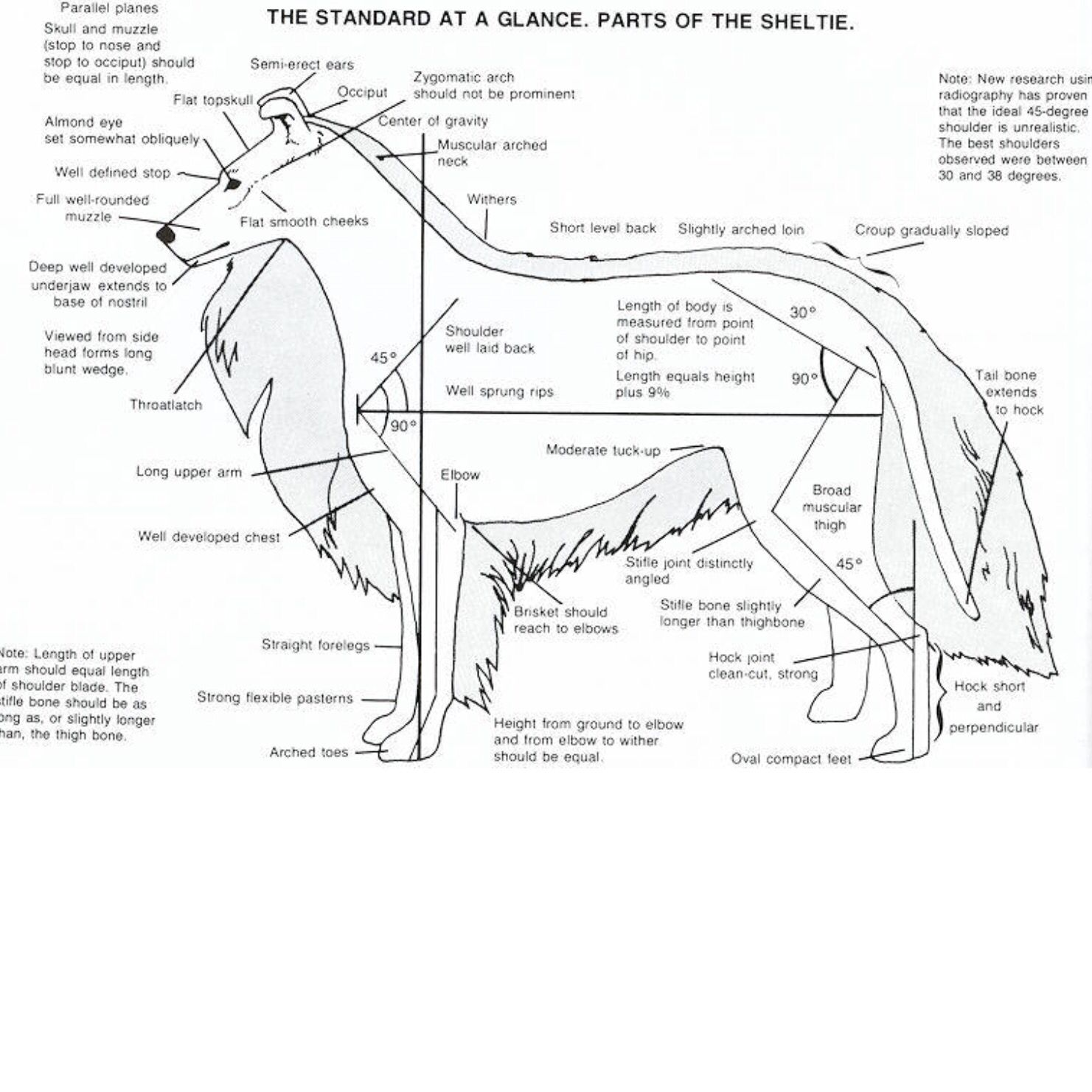 mouse dissection diagram nissan patrol wiring radio worksheet rat grass fedjp