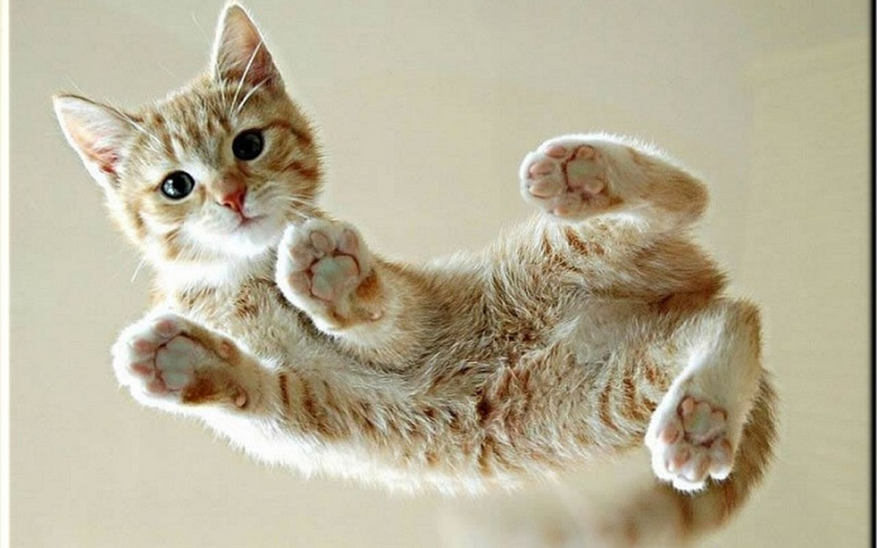 cats on glass tables i love kittens! more pics like this on the