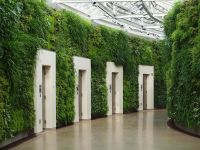 Indoor Green Wall With Awesome Long Leaved Grass And Lots ...