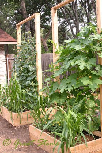 Square Foot Garden Maximize Vertical Potential With Trellises