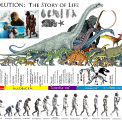 Diagram Of Evolution Timeline Switched Gfci Outlet Wiring The Story Life  Prehistoric Eras