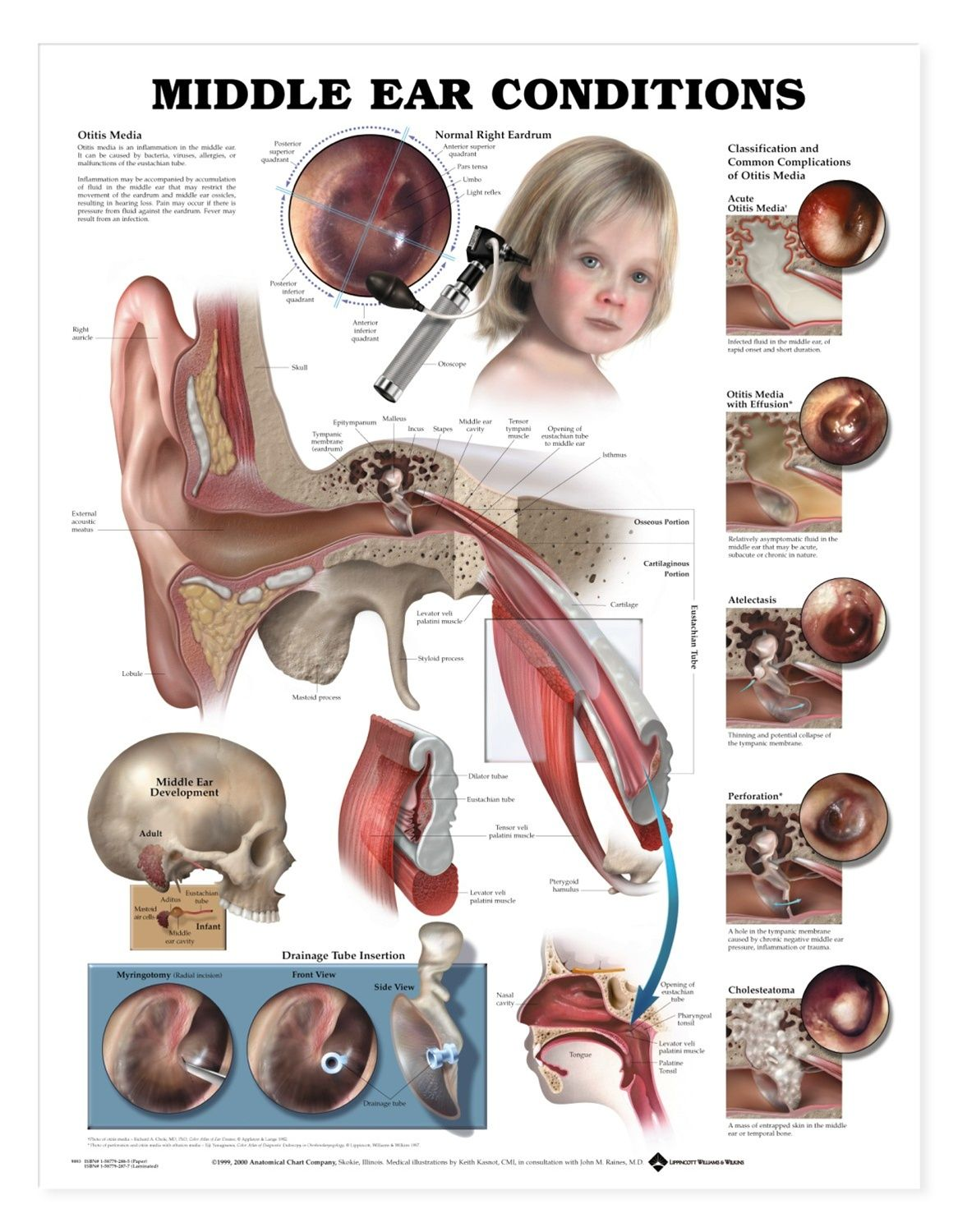 Ear Ache Causes And Treatment