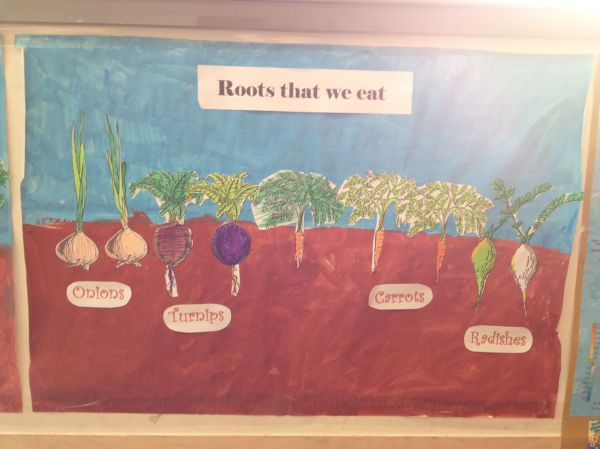 Plant Roots That We Eat