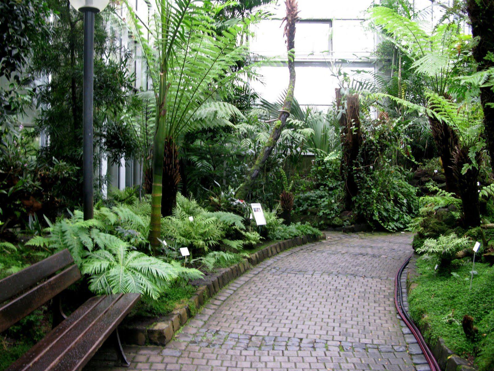 jardines tropicales pequeos  Diseo de interiores