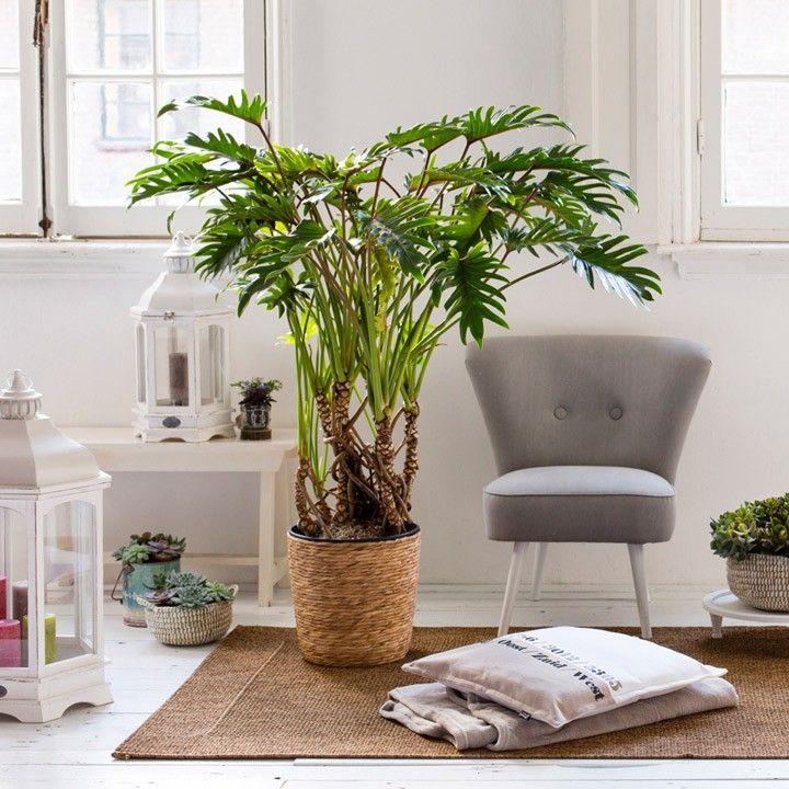 Woonkamer Planten Groot