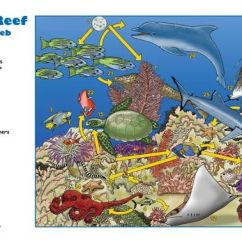 Whale Digestive System Diagram Vase 3d Origami Coral Reef Food Web   Chain Animals Habitats, ...