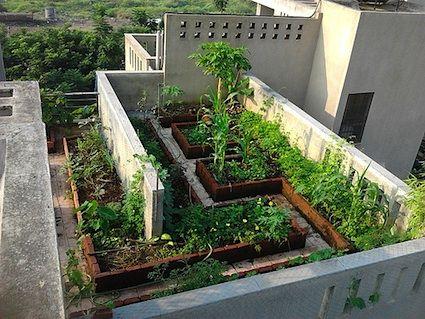 Terraced Vegetable Garden Bing Images Balcony Gardens