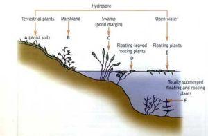 pond diagram | Ponds and Streams | Pinterest