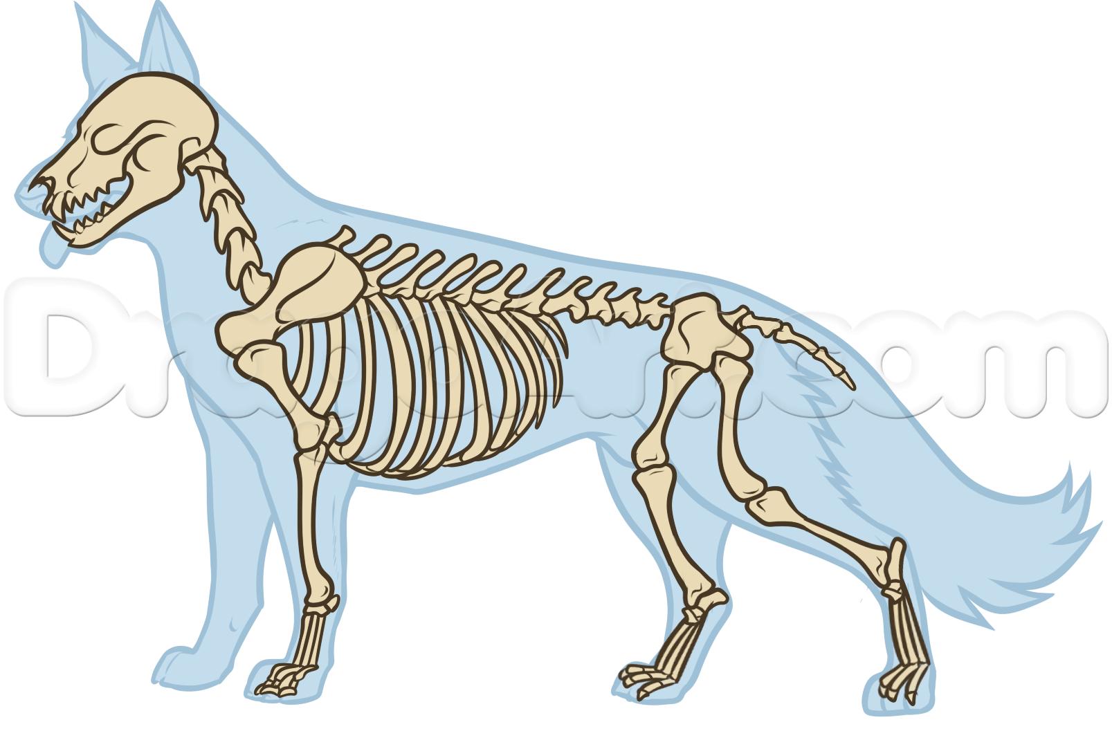 dog hind leg diagram directv swm 16 switch wiring anatomy bones drawing references pinterest
