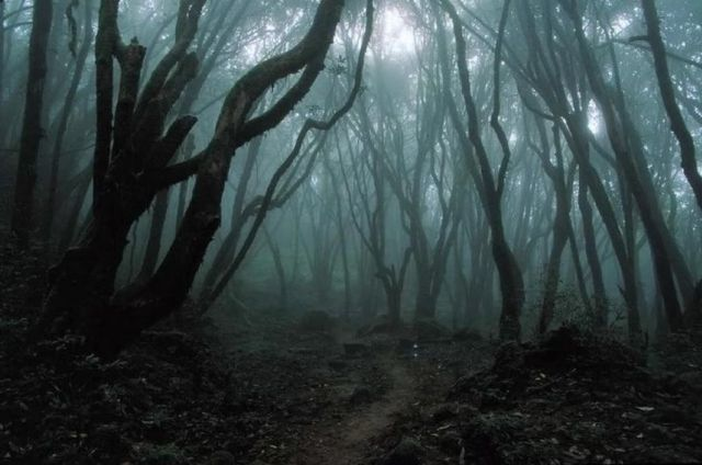 Image result for creepy woods