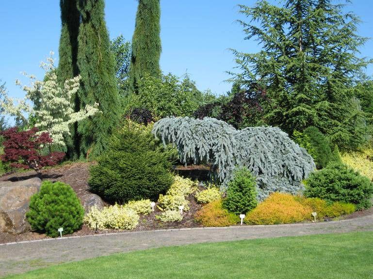 Conifer Garden Evergreen Garden Ideas Pinterest Gardens