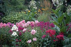 Schattenpflanzen Pflanzen Für Schattige Standorte Und Den