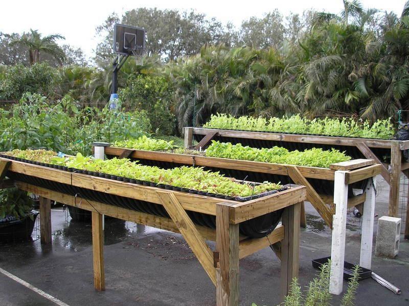 Raised Bed Vegetable Gardening For Beginners Bylinky Pinterest