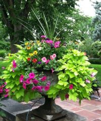 Building a Dream House: Front Porch Container Gardens ...