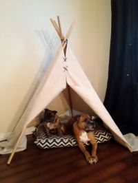 teepee dog bed - Google Search | My Pets | Pinterest | Dog ...