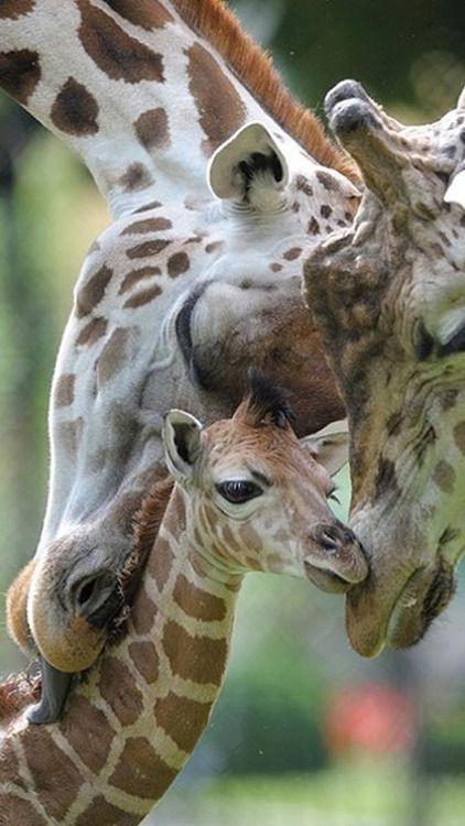 Safari Boy Baby Shower Ideas
