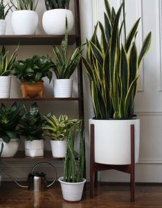 Urban jungle dressing your plants in creative plant pots also plantas decoholic pinterest house planters and jungles rh