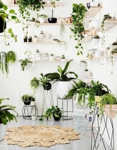 diy indoor plant display ideas that are borderline genius for wannabe gardeners in small spaces also like my facebook page zz zwyanezade dream green home rh za pinterest