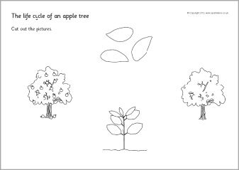 Apple tree life cycle sequencing sheets (SB8917