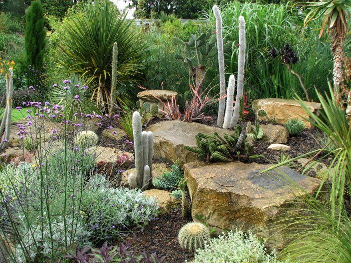 Cactus Front Garden Design Ideas Mayan Backyard Pinterest