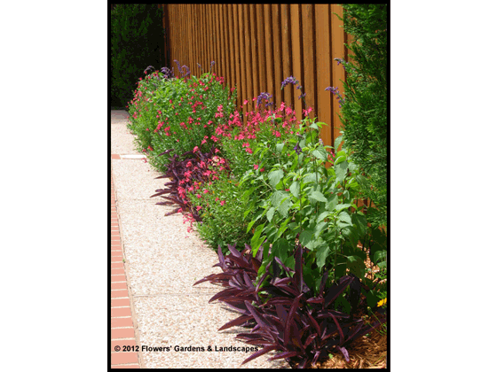 Perennials And Colored Foliage Plants Fill The Narrow Strip That