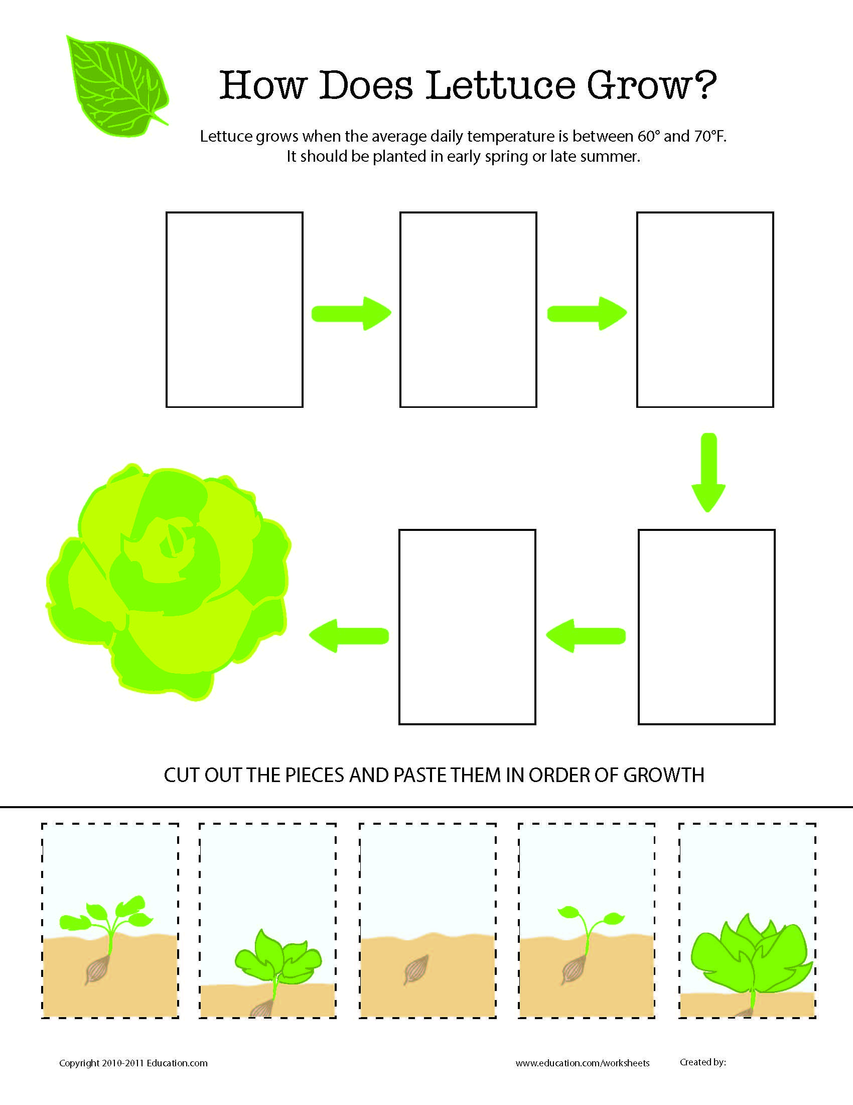 Vegetable Seed Worksheet