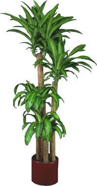 Low Light Plants, Indoor Plants & House Plants   House ...