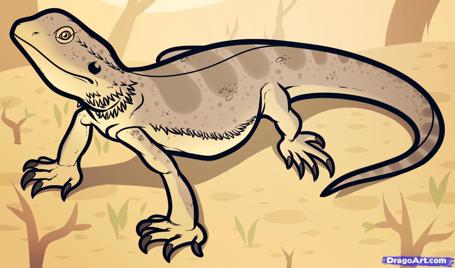 How To Draw A Bearded Dragon Bearded Dragon Lizard
