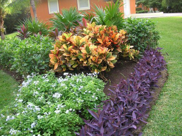 flowers of yucatan peninsula