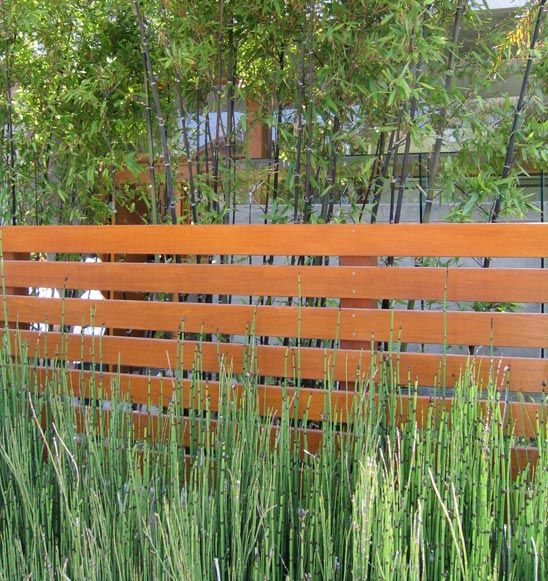 Modern Plantings Along A Fence Google Search Back Yard