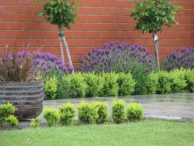 Lavender Garden Ideas — Gardening Made Easy Providing Garden
