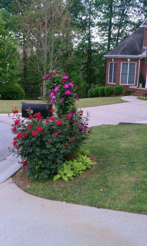 mailbox flower bed. clematis knock