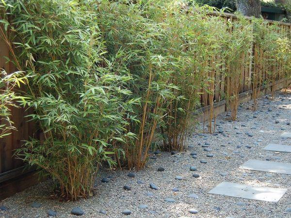 Bamboo Garden Design Ideas Privacy Fence Patio Landscape Ideas