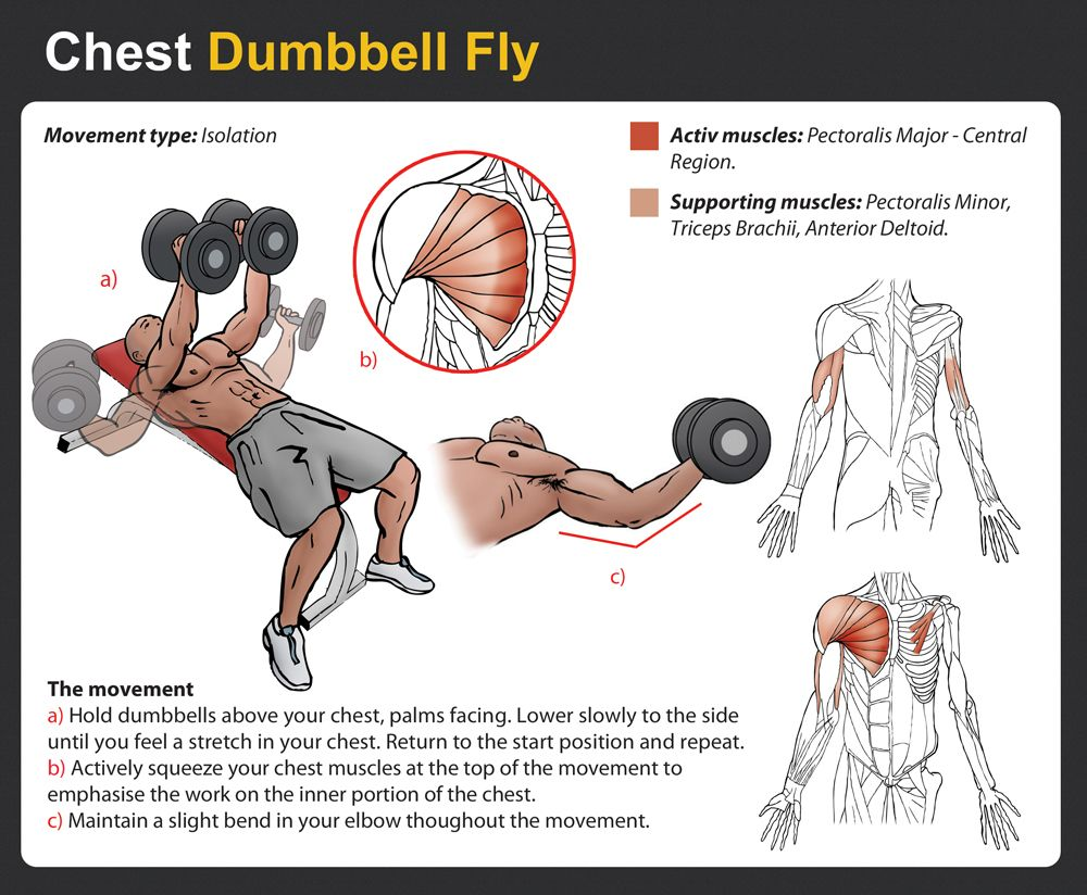 Dumbbell Pullover Muscles Worked