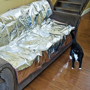 Here's An Idea To Keep The Dog Off The Sofa Def Easier Than