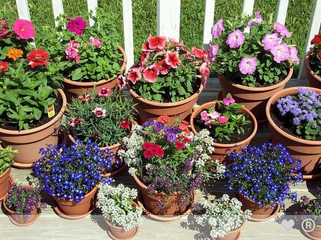 Outdoor Flower Pots Google Search Outdoor Flower Pots