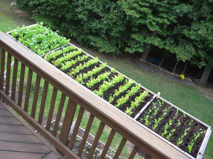 deer proof vegetable garden ideas - Deer Proof Vegetable Garden Ideas
