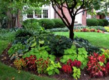 shade ideas for yards   The color scheme flows into the ...