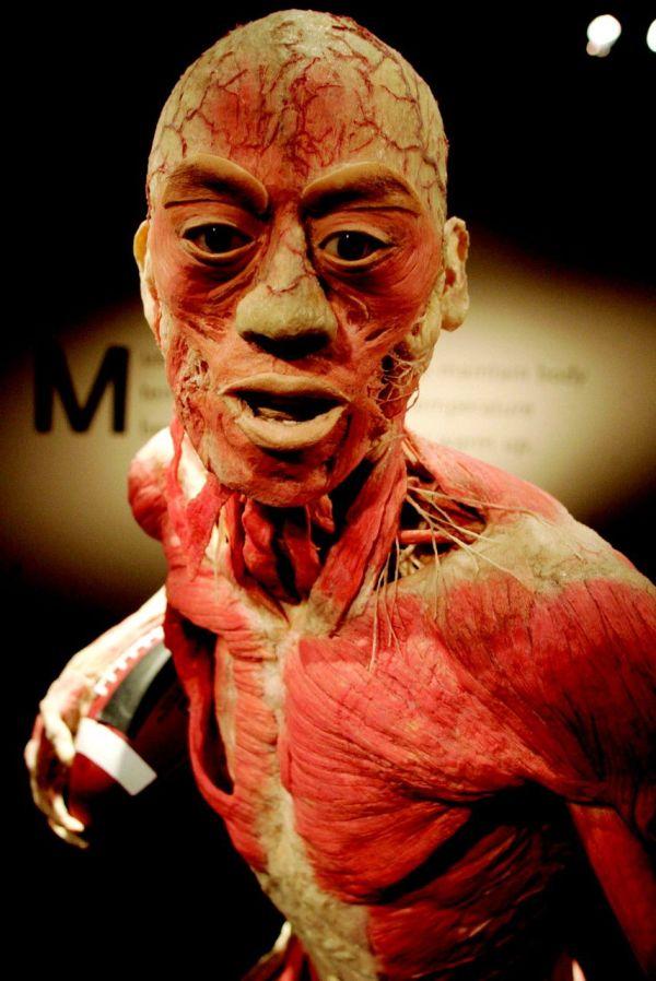 """Las Vegas 'bodies"""" Exhibit Spring Break 2014"""