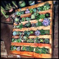 pallet living wall! | Garden/Landscaping | Pinterest ...