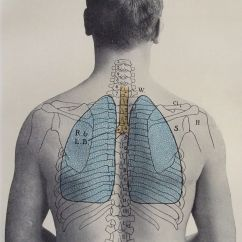 Where Are Your Lungs Located In Back Diagram True T 23f 2 Wiring Antique 1900s Medical Scientific Print Human
