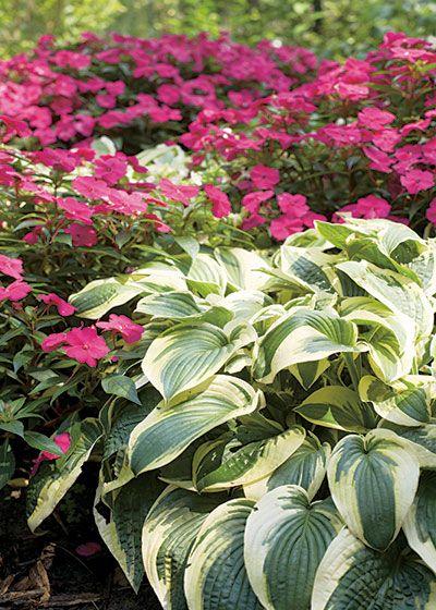 perfect companion plants hostas