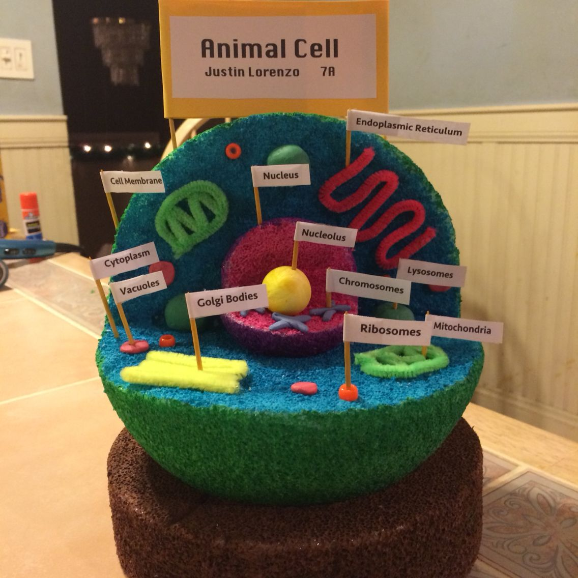 plant cell diagram for 6th graders guitar wiring 7th grade animal 3d project random things