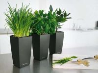 Black Modern Pots Indoor Kitchen Planters Placed In Indoor