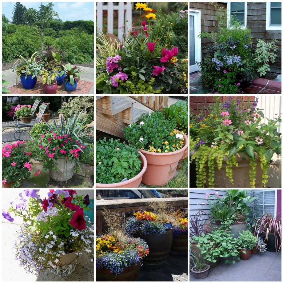 Container Gardening Pictures Container Gardens Backyard Decks