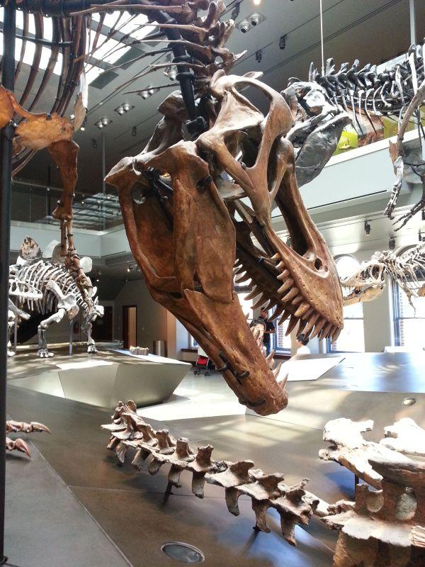 Los Angeles Natural History Museum & Tar Pits Dinosaur